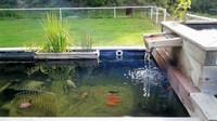 Le bassin des poissons